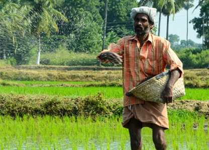 20 Lakh Paddy Farmers to be Trained in DSR