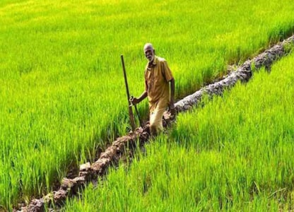 india-surpassed-china-in-growing-this-crop