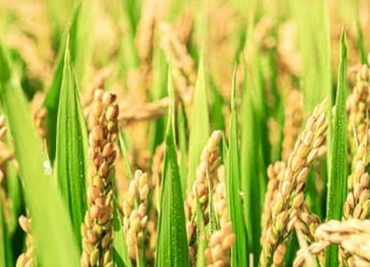 Problems faced by Paddy Farmers